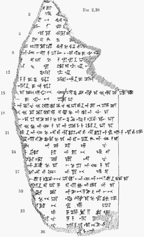 NIBIRU Fig-100