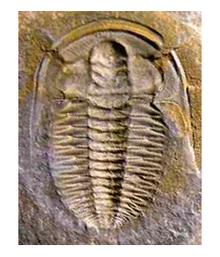 Grandes extinciones en la historia de la Tierra  - ¿Por qué se extinguieron los dinosaurios y otras especies? 1/2 (4/6)