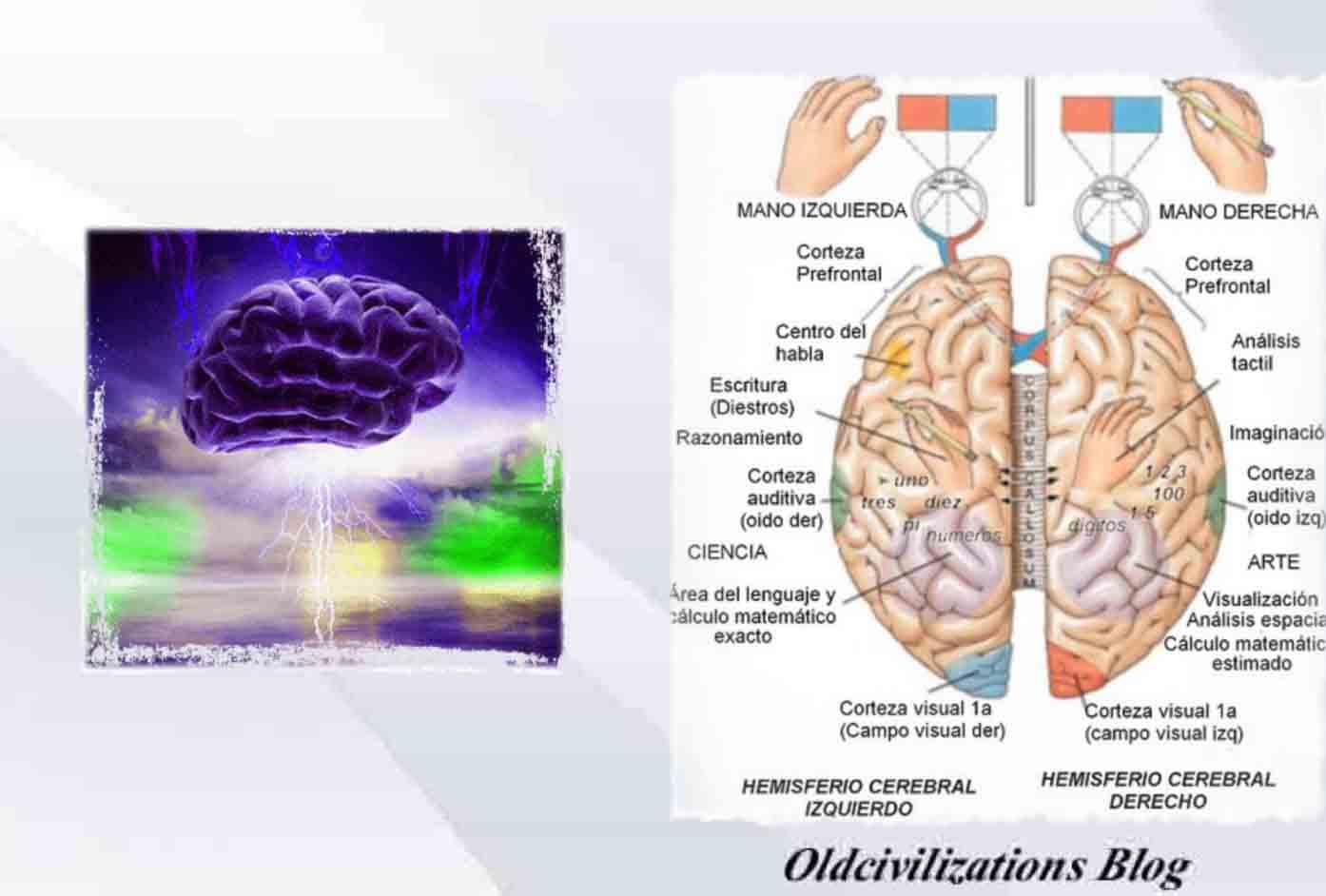El cerebro, ¿es el órgano más complejo que se haya creado ...